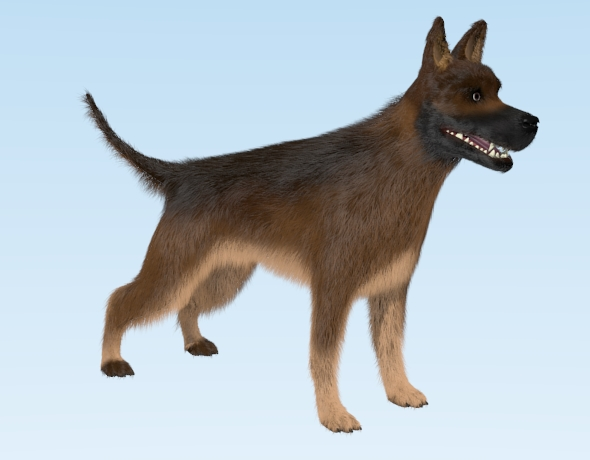 German Shepherd Dog - 3DOcean Item for Sale