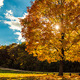 Autumn Leafs Bundle - VideoHive Item for Sale