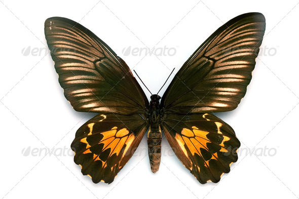 Butterfly series - Rare Beautiful Butterfly - Stock Photo - Images