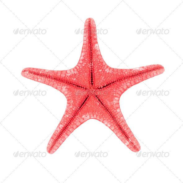 Red starfish - Stock Photo - Images