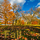 Fall Leaves - VideoHive Item for Sale