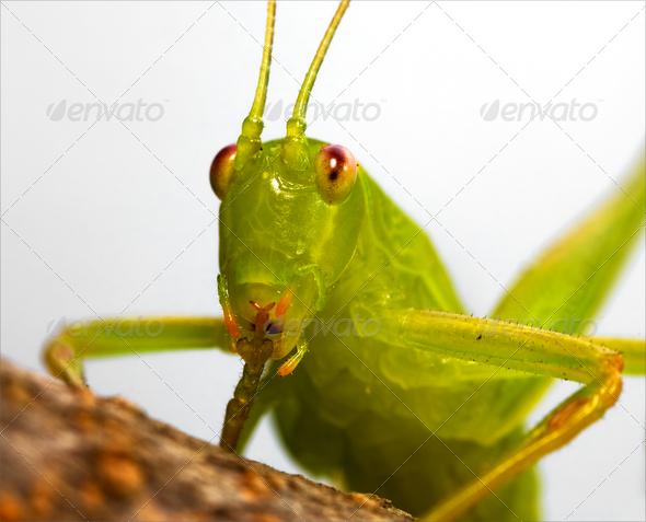 rude katydid - Stock Photo - Images