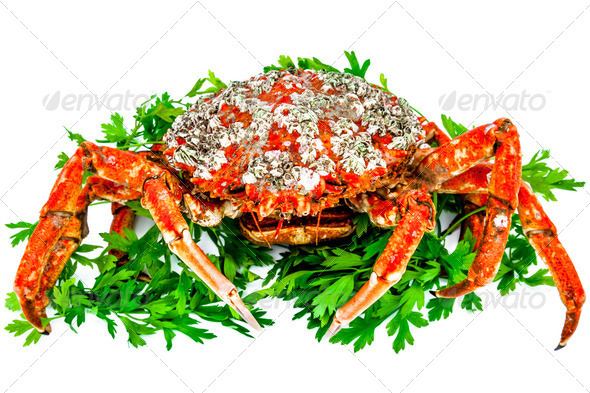 Spider Crab - Stock Photo - Images