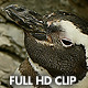 Sleepy Penguin Wakes Up - VideoHive Item for Sale