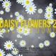 Daisy Flowers Backgrounds 2 - VideoHive Item for Sale