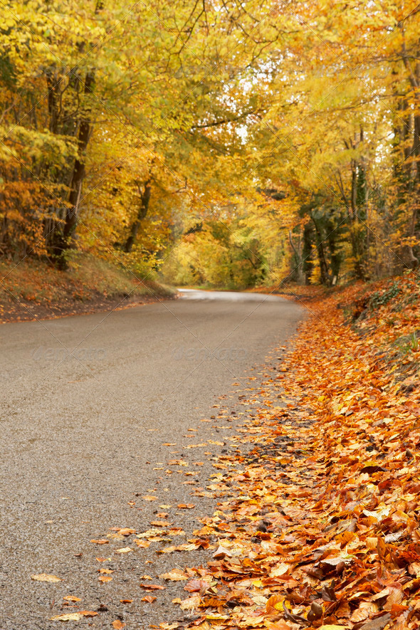 Country Road In Autumn - Stock Photo - Images