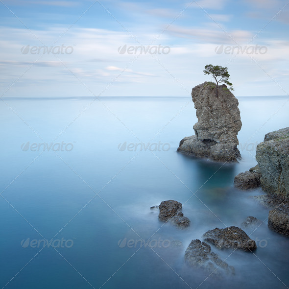 Portofino park. Pine tree rock cliff. Long exposure. Liguria, Italy - Stock Photo - Images