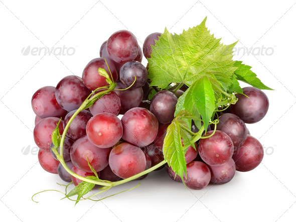 Dark blue grapes with a vine - Stock Photo - Images
