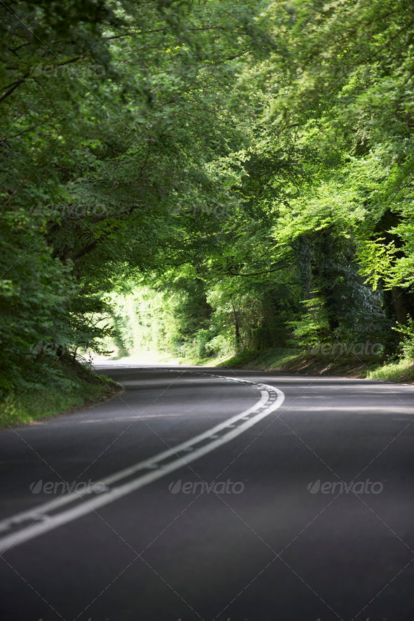 Country Road Lined By Large Green Trees - Stock Photo - Images