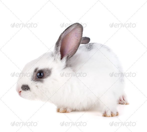 Small rabbit - Stock Photo - Images