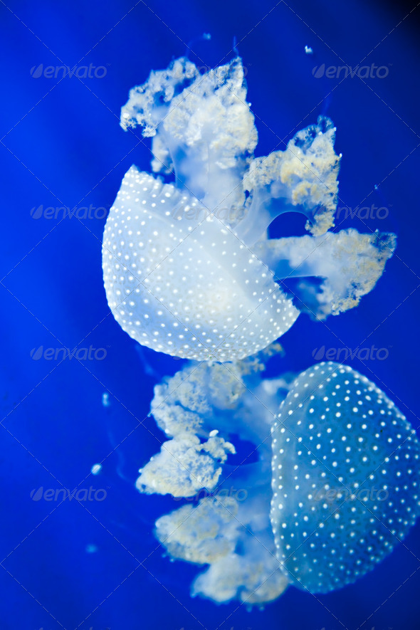 Jellyfish - Stock Photo - Images
