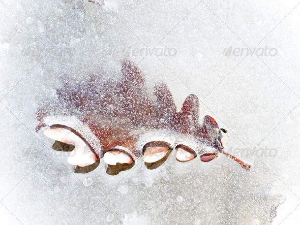Autumn leaf frozen in the ice - Stock Photo - Images
