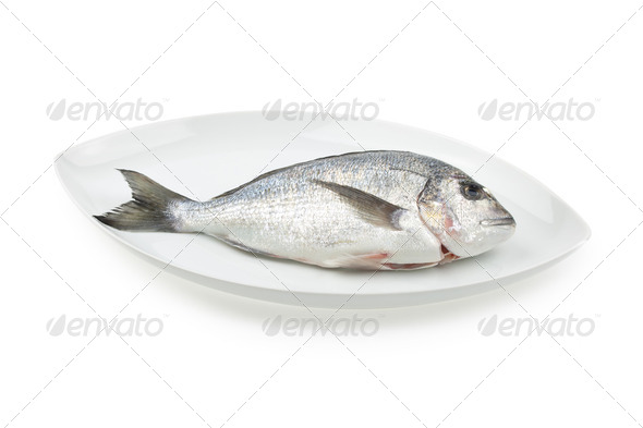 Dorada seafood on white elliptic plate with shadow. Bream fish. - Stock Photo - Images