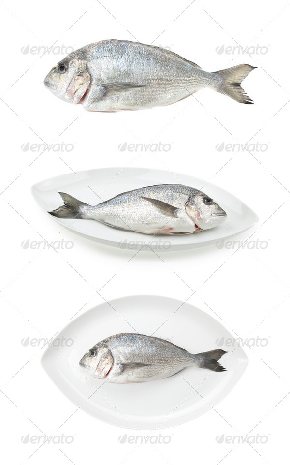 Dorada seafood three samples. Bream fish, raw food. - Stock Photo - Images