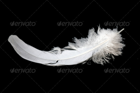 feather on black background - Stock Photo - Images