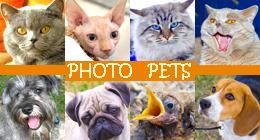 Photo pets