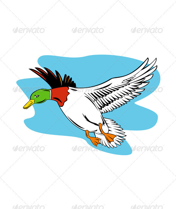 Mallard Duck Flying - Animals Characters