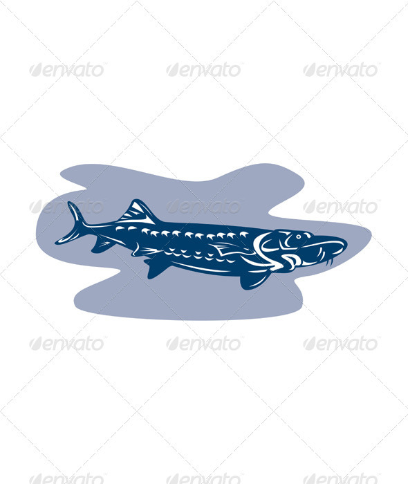 Sturgeon Fish Retro - Animals Characters