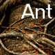 Ant 2 - VideoHive Item for Sale