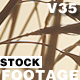 WheatStock 02 - VideoHive Item for Sale