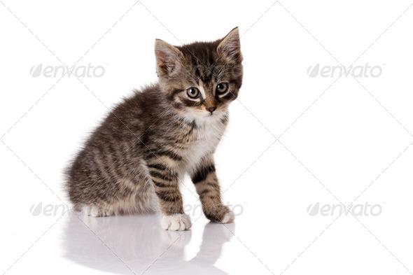 little kitten - Stock Photo - Images