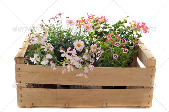 flowers in a crate - Stock Photo - Images