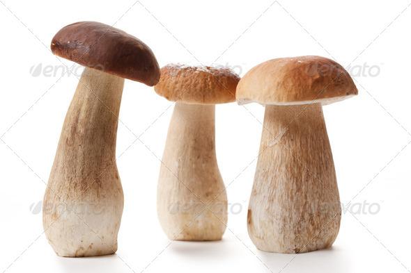 fresh  mushrooms - Stock Photo - Images