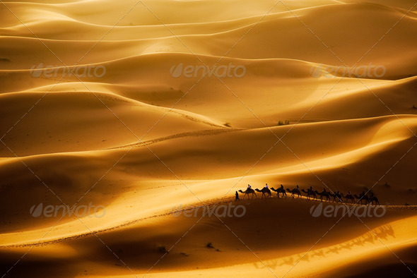 Camel Caravan - Stock Photo - Images