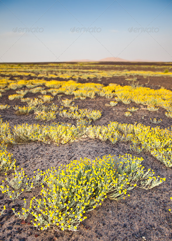 Blooming desert - Stock Photo - Images