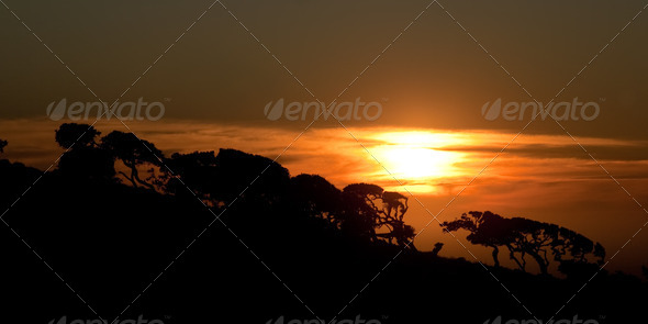 Sunset trees - Stock Photo - Images