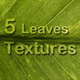 5 Leaves Textures - GraphicRiver Item for Sale