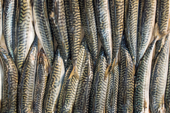 Fish on a market - Stock Photo - Images