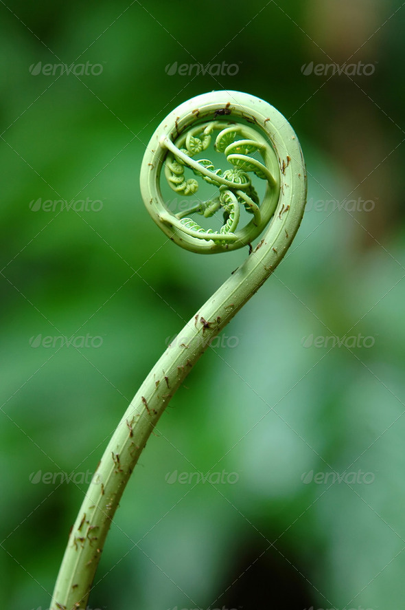 fern leaf - Stock Photo - Images