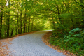 Empty road in the summer forest or park - PhotoDune Item for Sale
