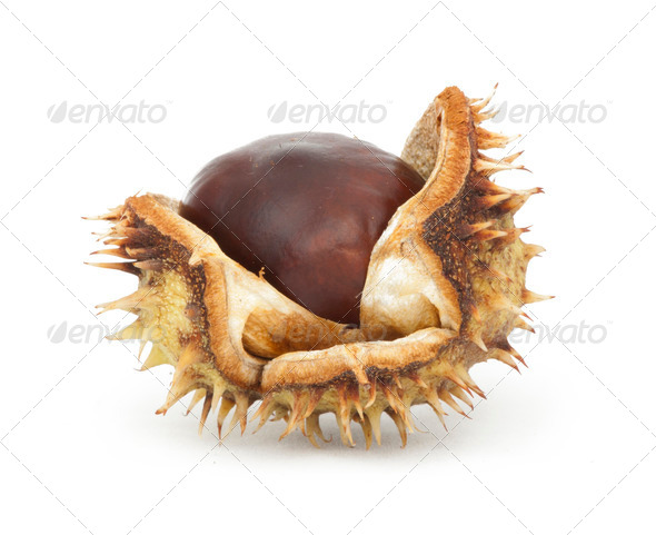 Chestnuts with shell - Stock Photo - Images