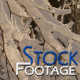 """""""Winter snowy Branches"""" FullHD Stock Footage H.264 - VideoHive Item for Sale"""