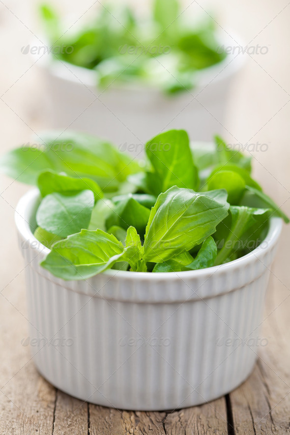 fresh herbs - Stock Photo - Images