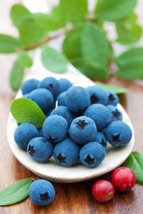 fresh blueberry - Stock Photo - Images