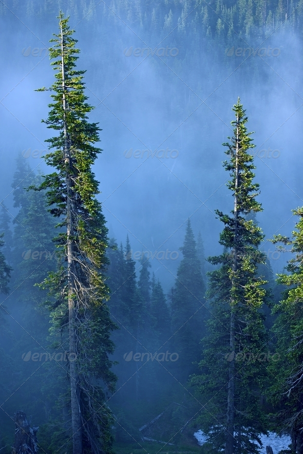 Fog in Forest - Stock Photo - Images