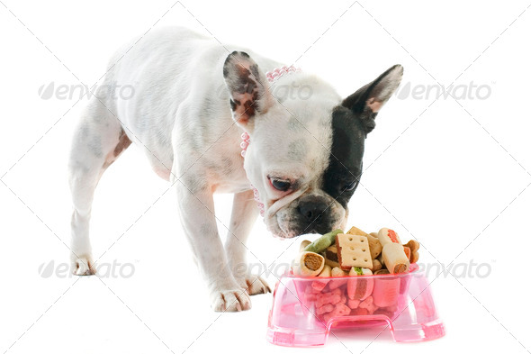 french bulldog and pet food - Stock Photo - Images
