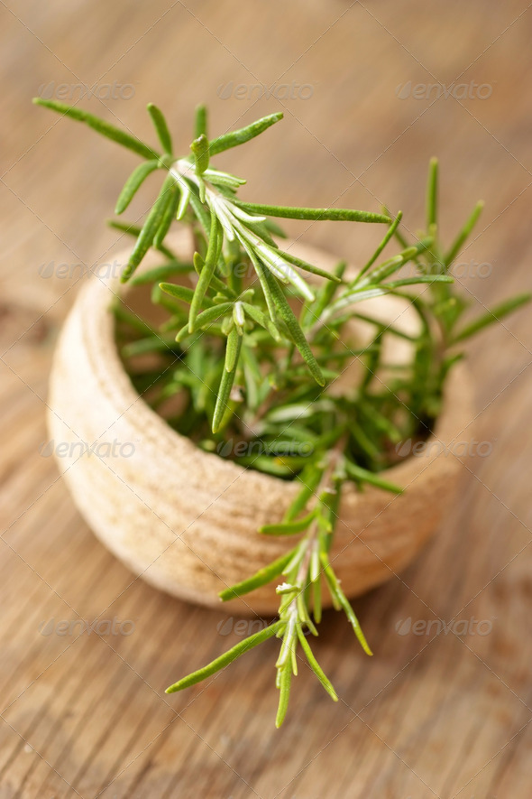 Fresh rosemary herb - Stock Photo - Images