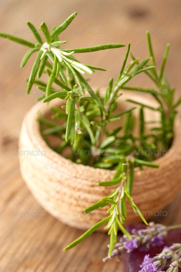 Rosemary in small teracotta bowl - Stock Photo - Images