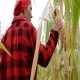 Farmer In The Corn Field - VideoHive Item for Sale