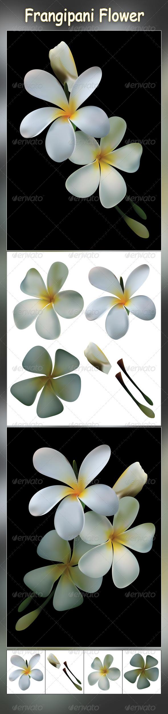Frangipani Flower - Organic Objects Objects