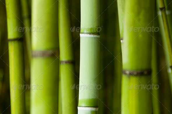 bamboo forest detail - Stock Photo - Images