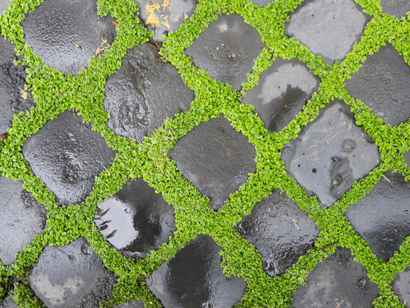 Sidewalk bricks with grass - Stock Photo - Images