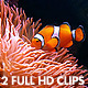 Clownfish And Jellyfish - VideoHive Item for Sale