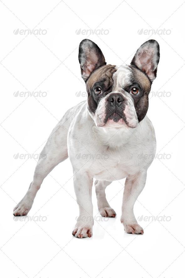 dog - Stock Photo - Images