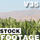 Corn Field 01 - VideoHive Item for Sale