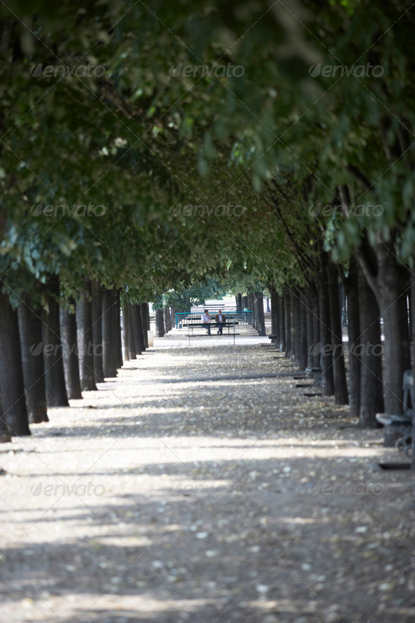 Tree Lined Boulevard,Paris,France - Stock Photo - Images